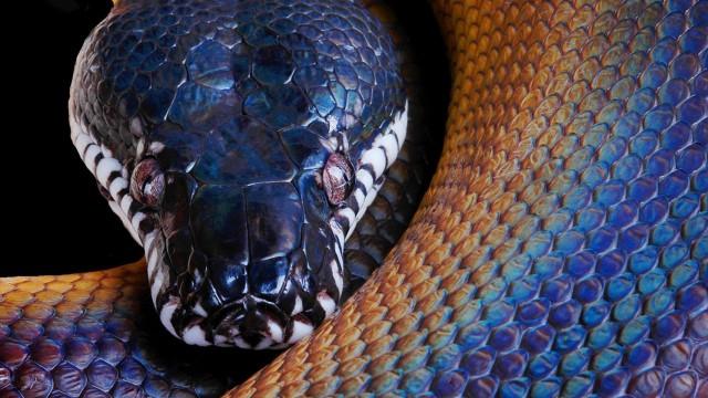 snake_python_color_head_51750_3840x2160